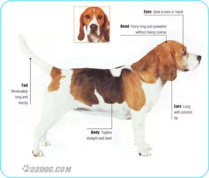 description   dogs life