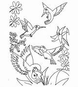Coloring Bird Hummingbird Toddler Humming Birds Printable Adults Birdhouse Drawing Momjunction Sheets Finished Flower Animals Preschoolers Hummingbirds Tropical Books Colors sketch template