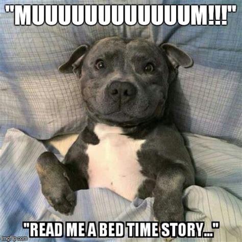 Meme Bed - bedtime imgflip