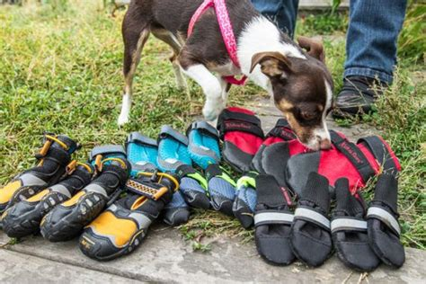 dog boots reviews  wirecutter   york times company