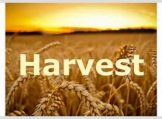 HARVEST 2018 CALLING ALL SCHOOLSCHURCHESOTHER ORGANISATIONS Black Country Food Bank
