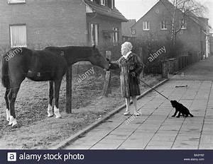 Schwarz Weiß Bilder Tiere : der siebziger jahre schwarz wei foto humor tiere frau geht einen hund an der leine und ~ Markanthonyermac.com Haus und Dekorationen