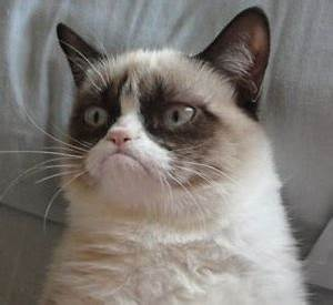 grumpy cat Archives AmoreMiao