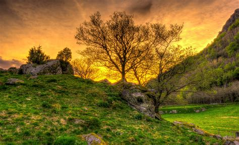 nature, Landscape, Trees, Sunset, HDR, Grass Wallpapers HD ...