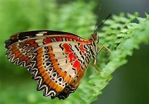 Schmetterlinge überwintern Helfen : mit insektenhotels einheimischen n tzlingen beim berwintern helfen matches21 ~ Frokenaadalensverden.com Haus und Dekorationen