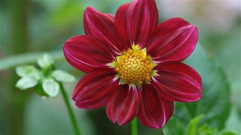 Herunterladen 1920x1080 Full Hd Hintergrundbilder Blüte