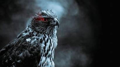 Hawk Wallpapers Eagle Birds Hawks Bird Smoke