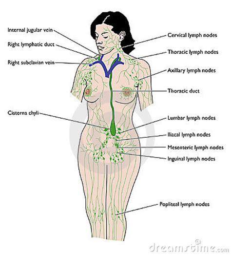 Verstoorde lever symptomen