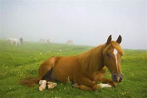 A Horse Sitting On The Grass In A Photograph by Laura Ciapponi