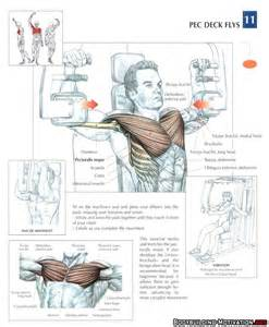 pec deck fly benefits 63 best images about strength anatomy on