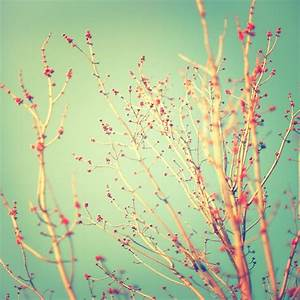Spring Tree Buds Nature Photography 8x8 by CarlChristensen ...