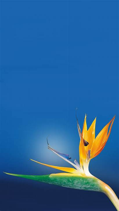 Iphone Paradise Flower Bird Wallpapers Close Android