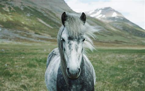 horse baby permafrost siberian preserved melting perfectly ancient reveals slashgear
