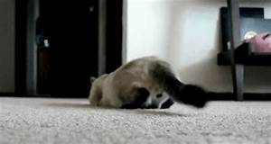 Cat Butt Dancing GIF - Find & Share on GIPHY