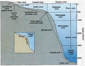 Food Webs And Challenges Of The Marine Environment