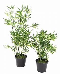 Plante Arbuste Exterieur