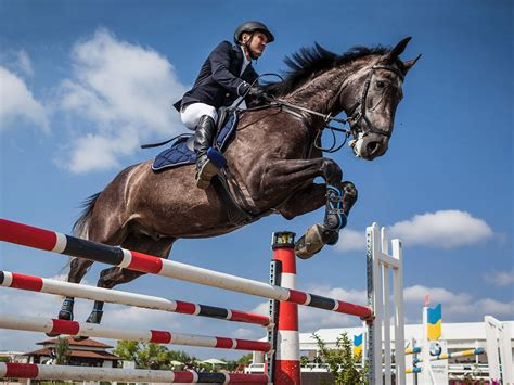 jumping horses horse jump equestrian jumpers eventing water fox