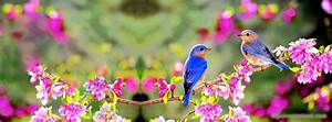 Beautiful birds Nature Facebook Cover | Facebook cover ...