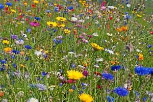 Graines Fleurs Des Champs : graines bio fleurs graine biologique fleur jardinage e elementerre ~ Melissatoandfro.com Idées de Décoration