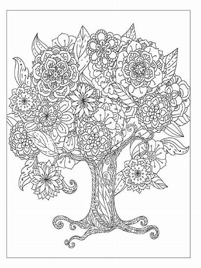 Coloring Detailed Flowers Designs Floral Books Pages