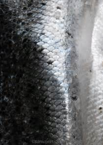 Fish Scales On Skin