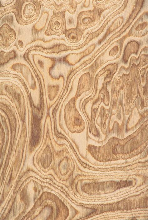 olive burl wood burled wood wood veneer wood