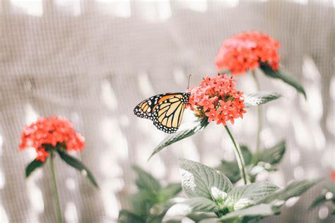 papillons en libert 233 espace pour la vie la babineau