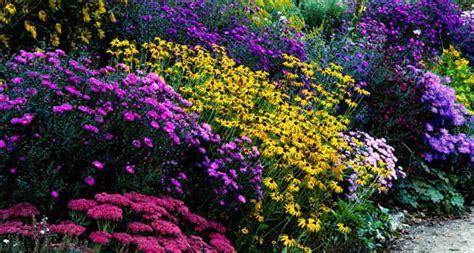 Winterharte Gartendeko by Chrysanthemen Garten Als Bunte Gartendeko Freshouse