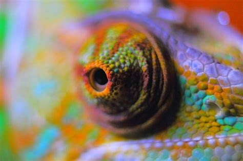 do all chameleons change color why and how do chameleons change color