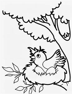 Bird Coloring Pages For Preschoolers - Coloring Home