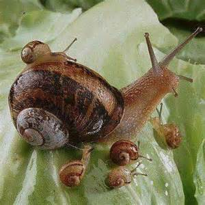 Snail and Snail Baby Mama
