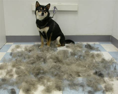 Low Shedding Large Dogs by Kingsbrook Animal Hospital S Low Shedding Medium
