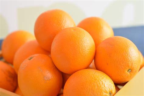 meyer lemon banco de imagens plantar fruta produzir abacaxi