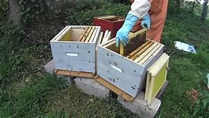 Comment Faire Une Ruche : apiculture faire une division en ventail doovi ~ Melissatoandfro.com Idées de Décoration