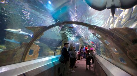 sea aquarium underwater world underwater world sea mooloolaba queensland attraction expedia au