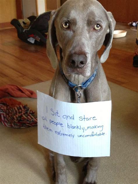 sharing funny dog shaming  pics love  love funny