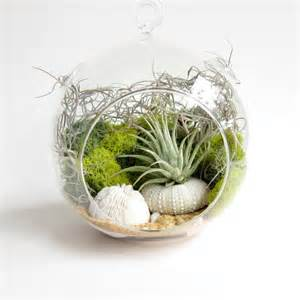 small cottage designs adorable air plant terrarium ideas