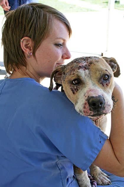pit bulls rescued  dog fighting compound
