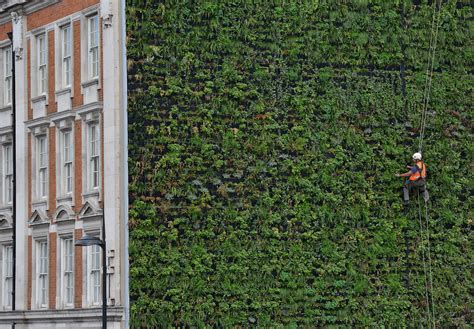through wall air 39 s largest quot living wall quot gary grant archdaily