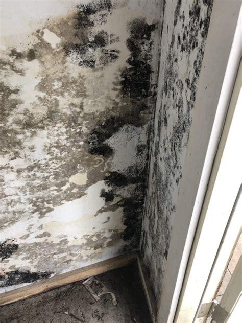 black mold   sink   mold  dangerous