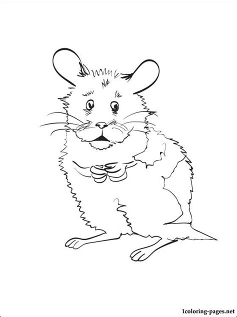 hamster coloring page  print  coloring pages