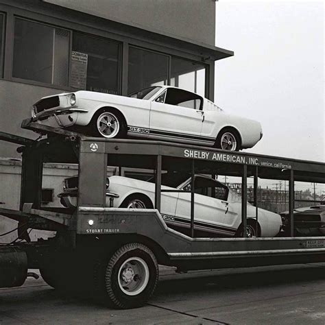 delivering shelby mustangs vintage muscle car