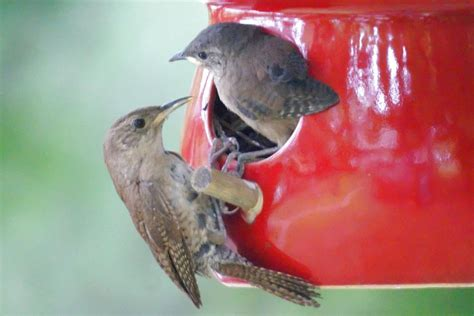 birds   birdhouses    attract