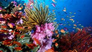 76 Sea Life HD Wallpapers | Backgrounds - Wallpaper Abyss