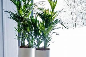 Pflanzen Fürs Bad Ohne Fenster : beleuchtung f r zimmerpflanzen ~ Frokenaadalensverden.com Haus und Dekorationen