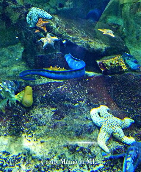 visiting san francisco s aquarium of the bay crafty in me