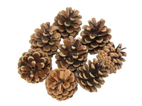 craft with pine cones craft pine cones art craft factory