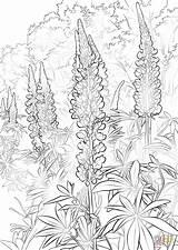 Coloring Bluebonnet Pages Flower Drawing Bonnet Printable Paper Getdrawings sketch template