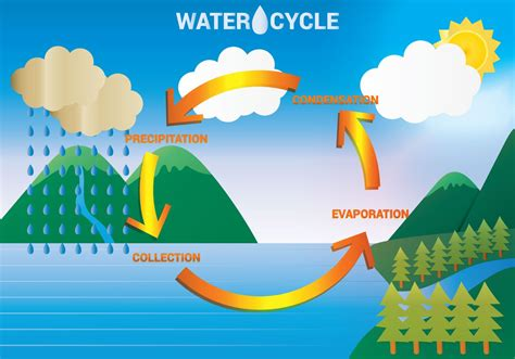 diagram  water cycle diagram site