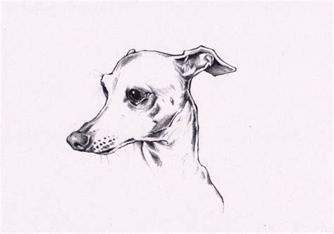 foto de Custom pencil drawing of Your Pet from digital by